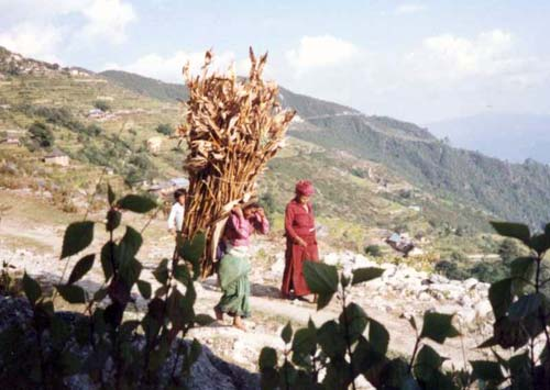 Young Woman Carrying Load of Maize in Kathmandu Valley, Nepal, 1980s