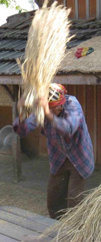 Human-Powered Rice Threshing, Chitwan, Nepal, 2008