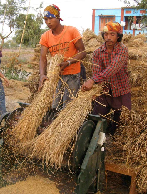 Mechanized Rice Threshing, Chitwan, Nepal, 2008