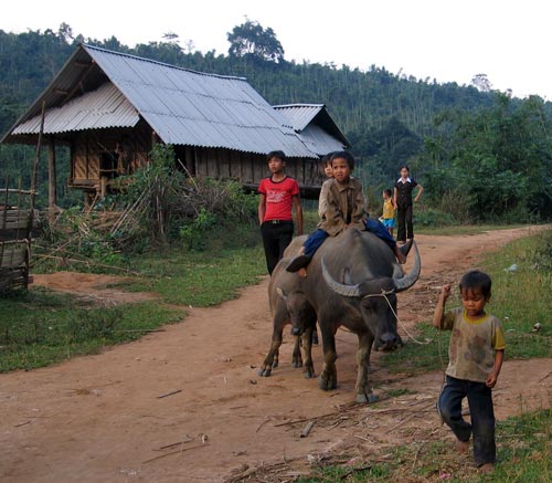 Khmu children and their buffalo, 2005